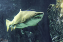 Un film de requin avec Kad Merad au Bassin d'Arcachon